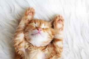 salud de tu gato
