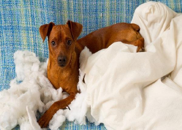 perros nerviosos con cojines