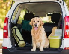 Cómo viajar con tu perro esta Navidad