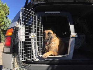 viajar con tu perro en transportín
