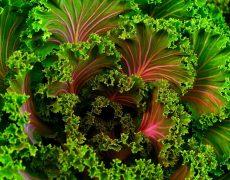 Receta con kale para cocinar en invierno