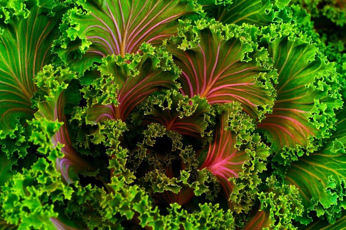 Col kale para preparar recetas con kale