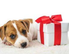 Regalos para vuestras mascotas en TiendAnimal