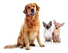 Cómo cuidar la salud dental de tu perro