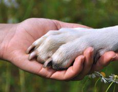 Cuidado de las almohadillas para perros