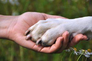alt-almohadillas-perros