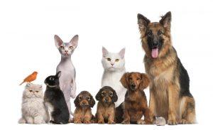 Hay diferentes tipos de mascotas que pueden aportar muchos bemneficios