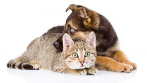 Los perros y gatos son las mascotas más comunes