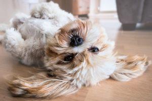 las mascotas pueden ser divertidas y darnos mcuha felicidad