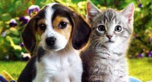 Hay muchos beneficios de tener una mascota en casa, sobre todo cuando se trata de perros y gatos