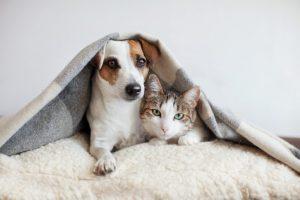 cuidados que necesitan las mascotas en invierno
