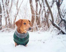 Cuidados para las mascotas en invierno