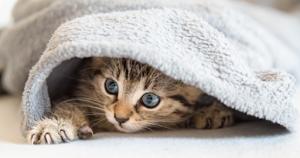 cuidados mascotas en invierno