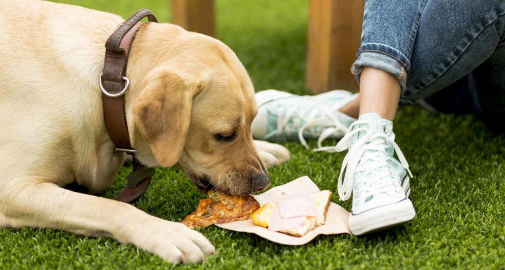 lista de alimentos prohibidos para perros