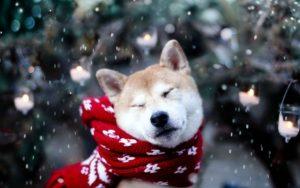 El frio en los perros