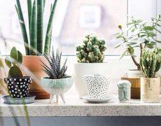 Cuidar las plantas: La nueva moda que invade las casas