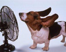 Cuidar mascotas: consejos para verano