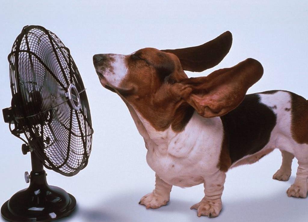 cuidar mascotas en verano